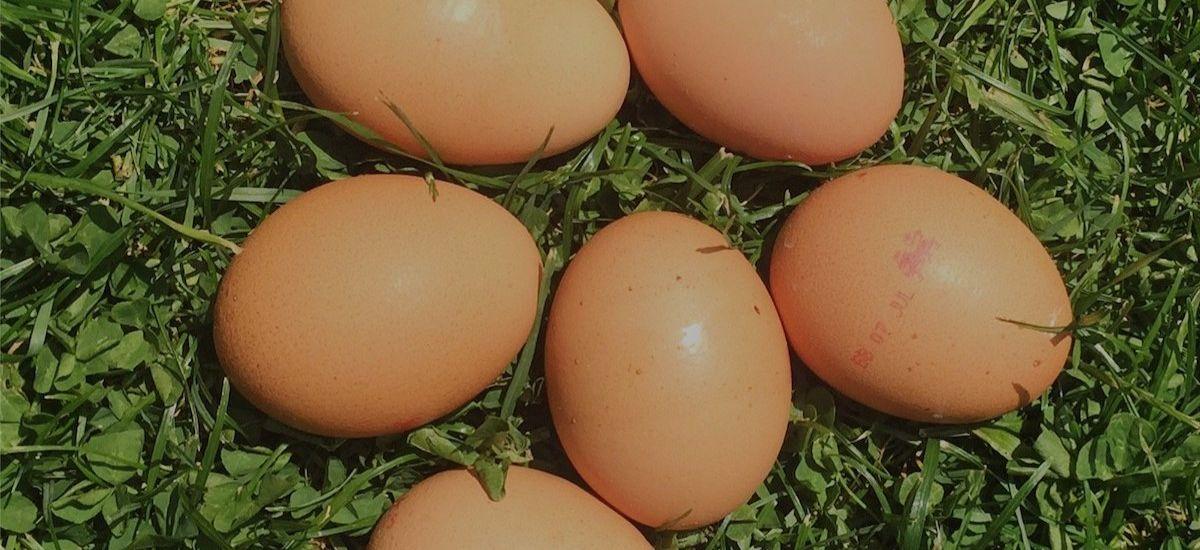 Award-winning free range egg supplier - investment opportunity