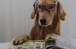 The UK's leading pet marketing agency launches new publication - investment opportunity