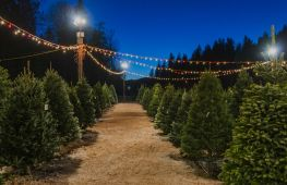 Premier Christmas tree growers and retailers delivering festive luxury - investment opportunity