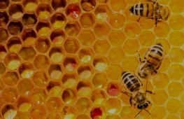 Wholesaler of totally pure and authentic honey - investment opportunity