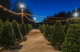 Leading Christmas tree growers and retailers delivering festive luxury - investment opportunity
