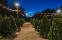 Leading Christmas tree growers and retailers providing festive luxury - investment opportunity